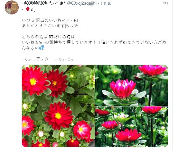 รูปถ่ายดอกไม้ 3