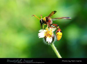 การภาพแมลงให้สวย