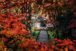 ช่างภาพจากประเทศญี่ปุ่น ภาพสวยๆ
