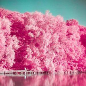 แอพพริเคชั่นAnalog Film Pink - Photo Editor, Paris