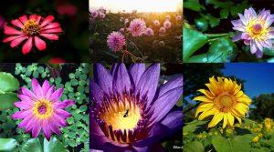 รวมการถ่ายภาพดอกไม้