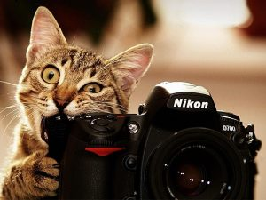 แชร์วิธี-แมวถ่ายภาพ