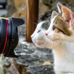หมวด Close-up-ถ่ายภาพแมว